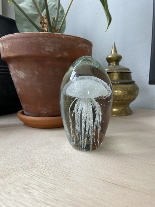jellyfish white in glass